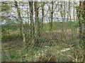SD7903 : Fletcher's Canal (Disused) by Alexander P Kapp