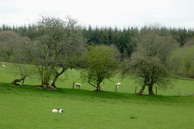 Pasture north-east of Beulah, Powys