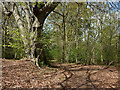 SD4489 : The footpath through Durham Bridge Wood by Karl and Ali