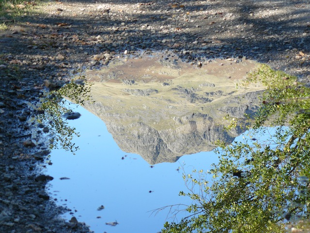 Harrison Stickle reflected in a puddle