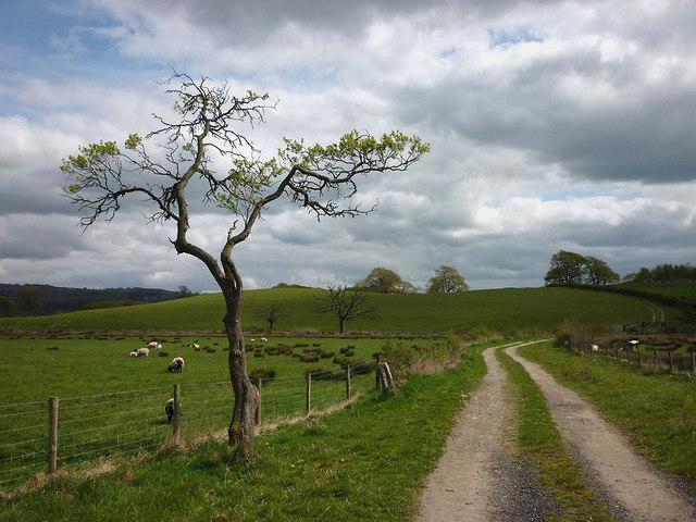 Holmes Lane and Nabs Hill (29m), Lyth Valley