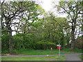 SJ3873 : Woodland, Willowdale Way by Sue Adair