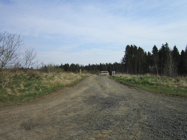 A forest road near Crookbank