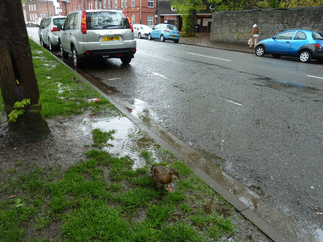 Lovely weather for a duck in Park Place, Cathays, Cardiff