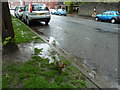 ST1877 : Lovely weather for a duck in Park Place, Cathays, Cardiff : Week 19