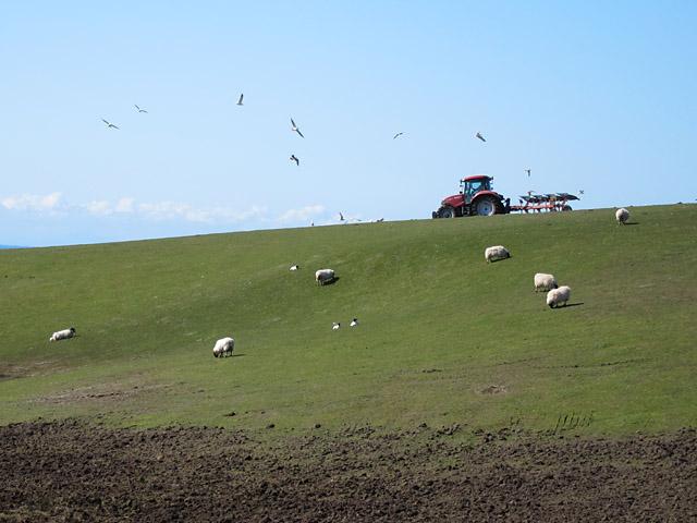 Ploughing at Kilchiaran
