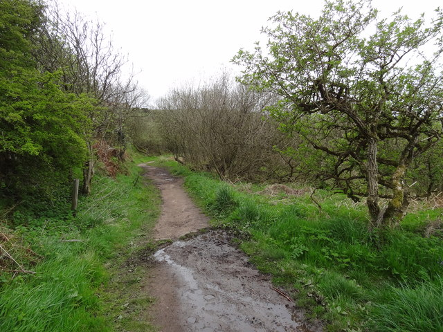 Cleveland Way near Ravenscar