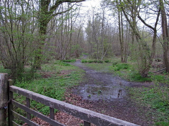 Looking into Stour Wood