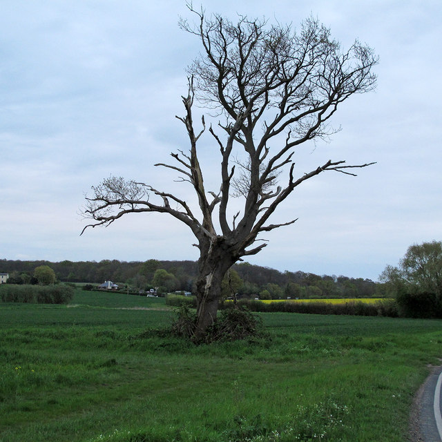 Tree on field boundary