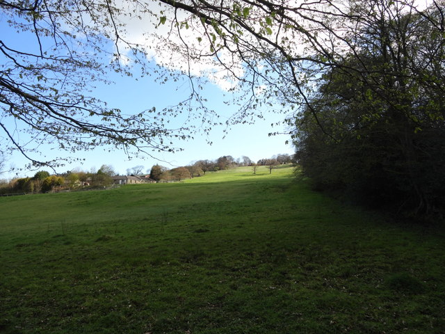 View from the woodland edge