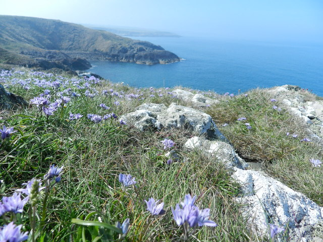 Spring Squill at Porth Dinllaen