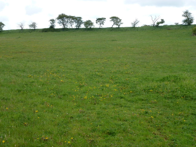 Rolling pasture on a Norfolk hillside