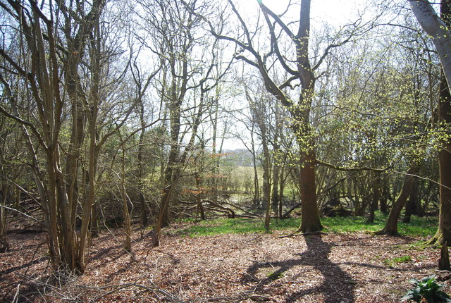 Woodland on Ashdown Forest