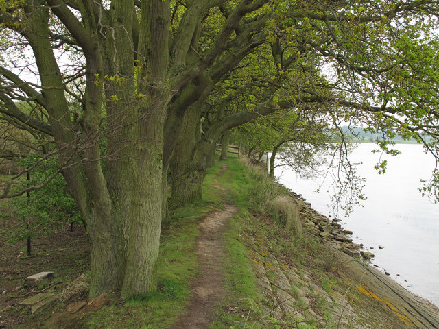 Oaks near the embankment path
