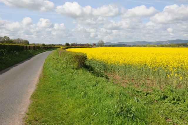 Birch Lane and oilseed rape
