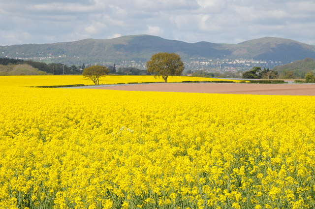 Great Malvern and oilseed rape fields