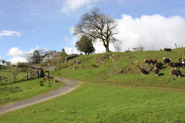 Park Farm with Herdwicks