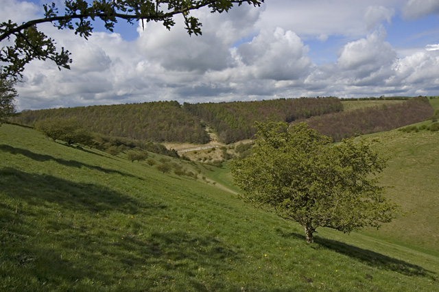 Deep Dale, near Bishop Wilton