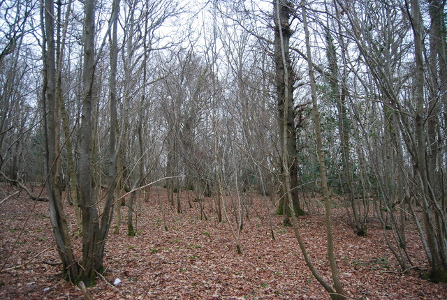 Newbridge Wood