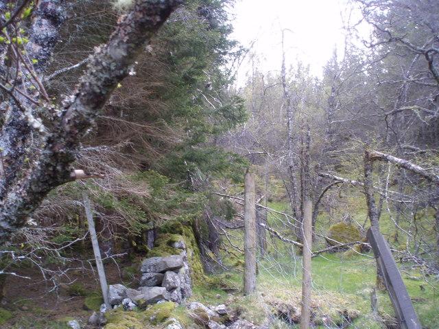 Dell-Knockie boundary wall by Loch Knockie