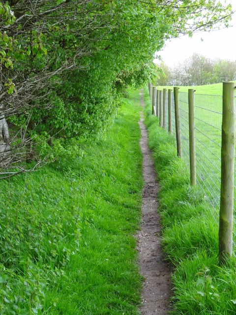 Footpath between field and forest