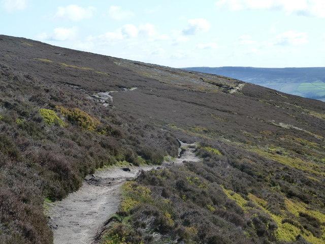 Footpath across Rowland Cote Moor