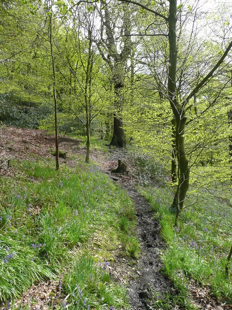Sowerby Bridge Footpath 135 in Rough Hey Wood, Norland