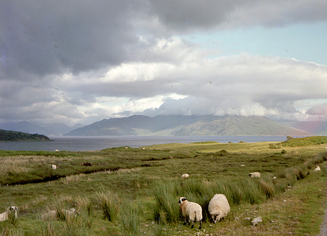 Sheep by the road