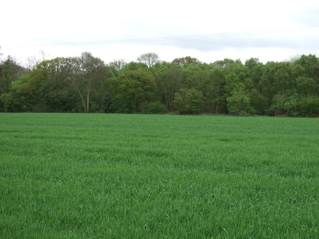 Farmland towards Thorringtonhall Wood