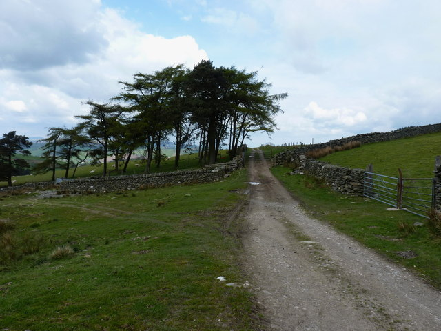 Shelterbelt of trees, and sheepfolds, at Cefn y Ffridd