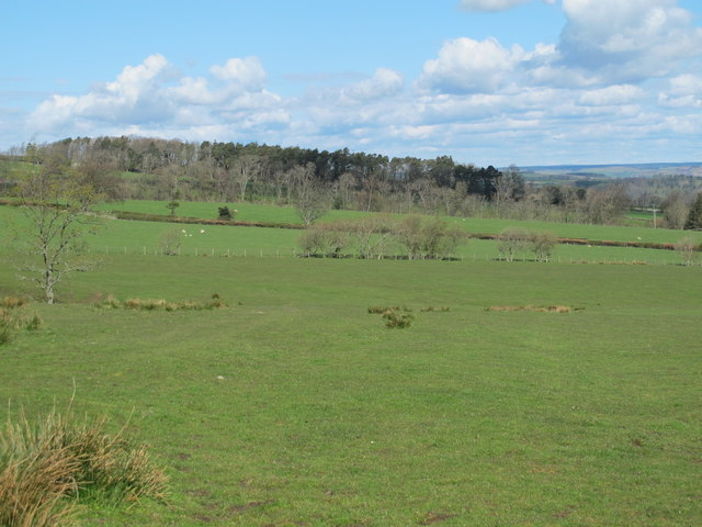 Rough pastures north of the ruin at Cleugh Bank (2)