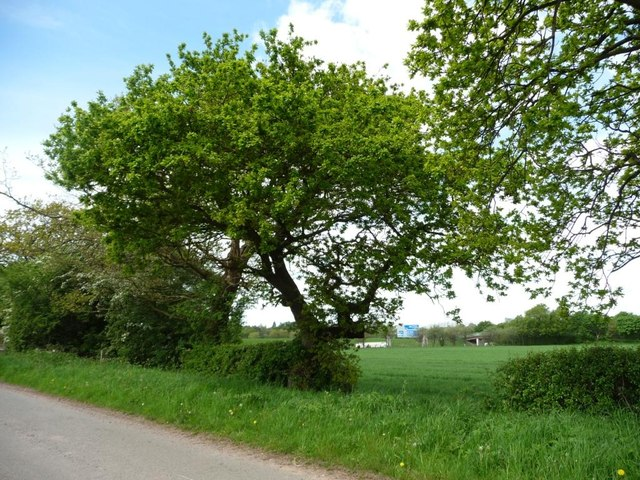 Roadside trees, Sudlow Lane