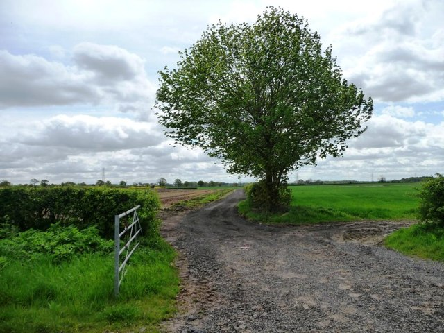 Tree alongside a farm track