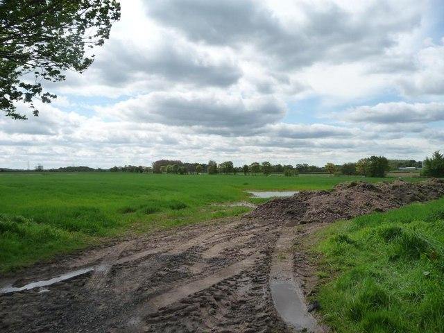 Muddy entrance to waterlogged field