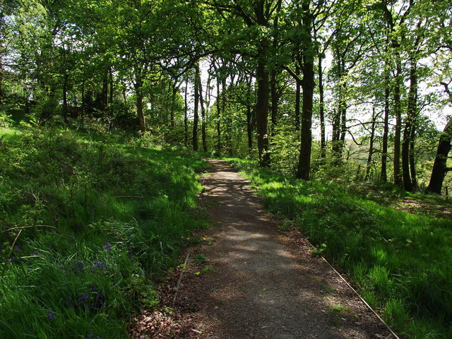 Woodland walk in Egerton