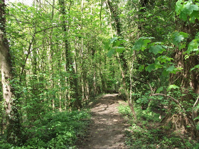 Path through the woodland strip