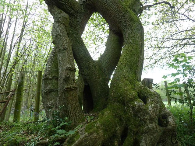 Unusual Tree Formation On The Northern 169 Dave Spicer