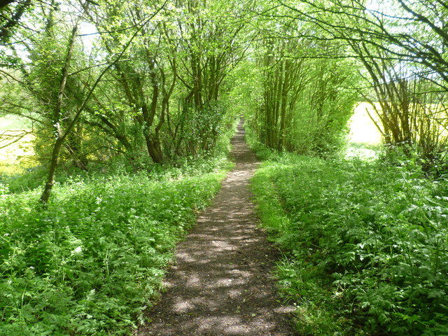 Lord's Walk towards Great Leybourne Wood