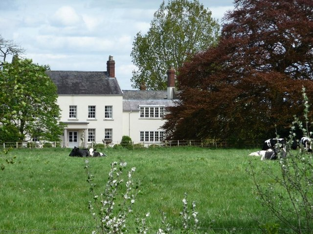 Dairy cows grazing in front of Allostock Hall