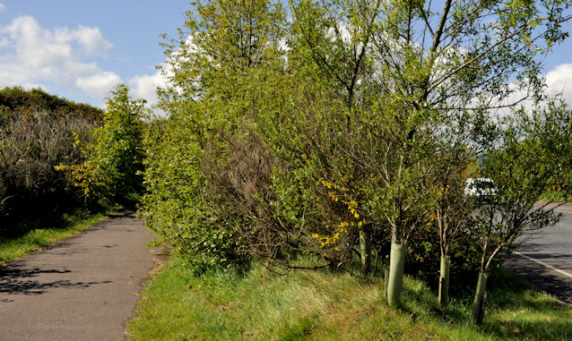 Road landscaping, Comber (1)