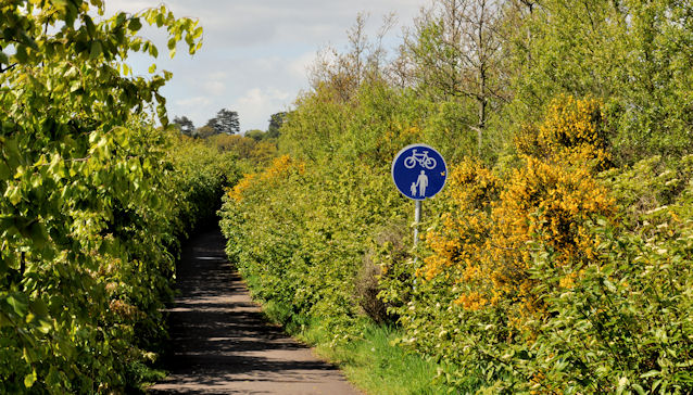 Road landscaping, Comber (2)