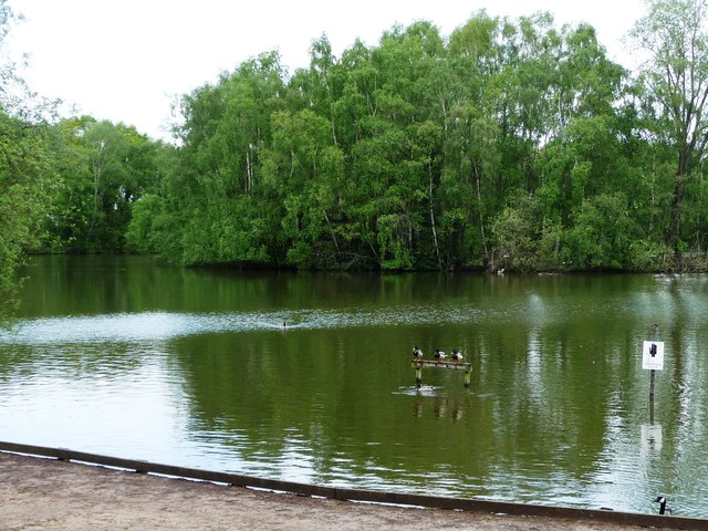 Mallards perched on a notice, Shakerley Mere