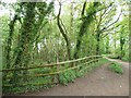 SJ7371 : Path on the western side of Shakerley Mere by Christine Johnstone