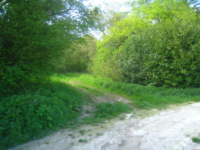 Access to Well's Copse