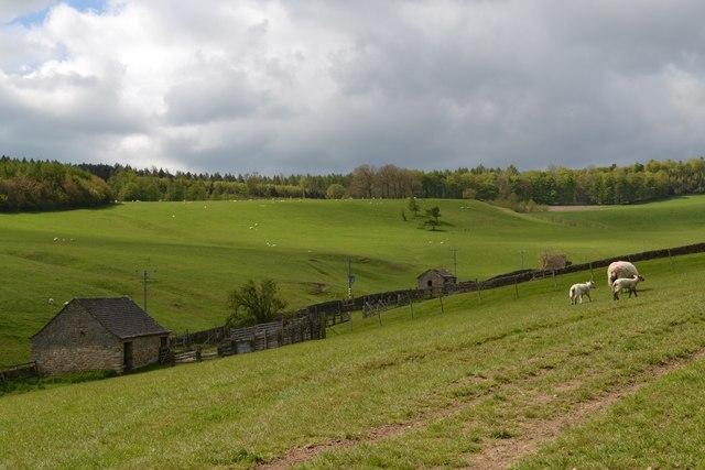 Rolling pasture land near Edensor