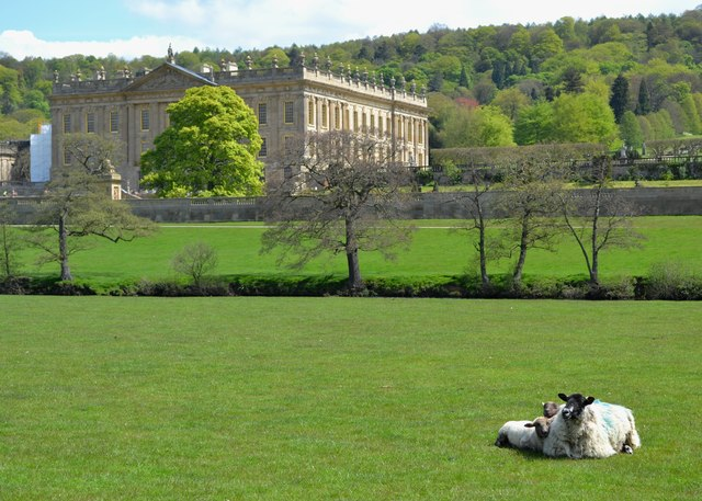 Ewe with two lambs in Chatsworth Park