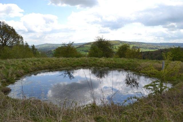Reservoir pond west of Rowsleymoor Wood
