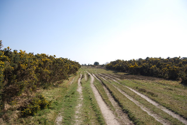 Vanguard Way through Gorse