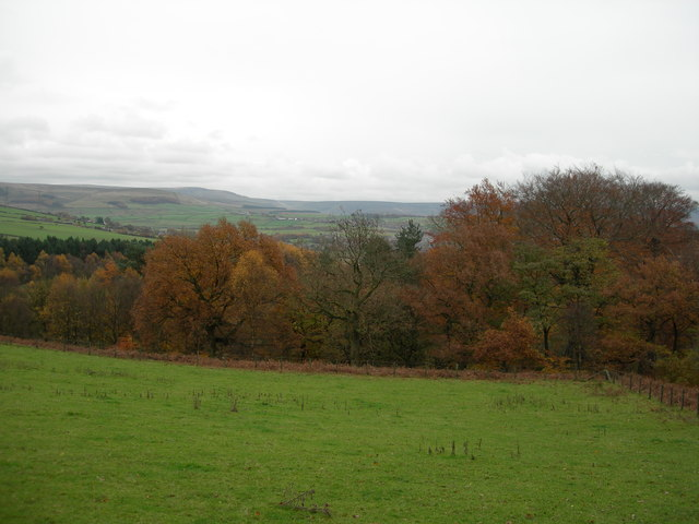 View east to Swallow's Wood