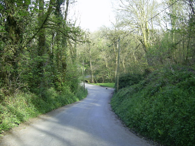 Country Road through Millpark Wood